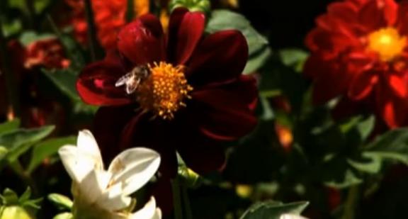 Bee on Flower - YouTube screenshot