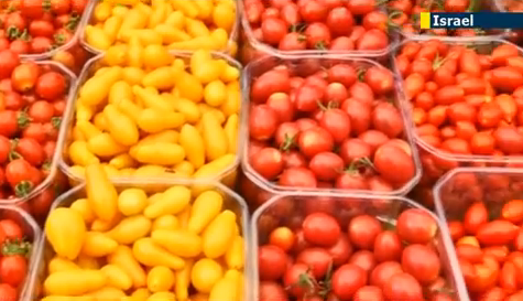 Tel Aviv Farmers' Market offers a dozen varieties of cherry tomatoes  -   jn1.tv screanshot