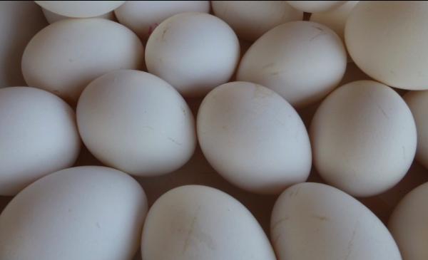 settlement-eggs-photo-israelandstuffpp