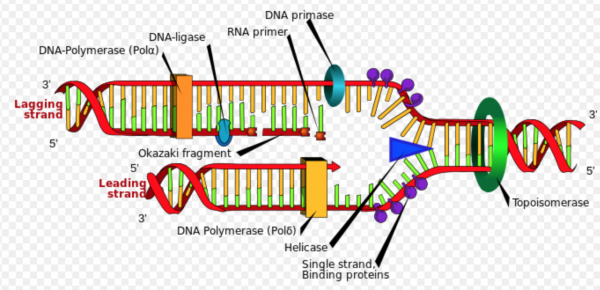 dna-wikipedialadyofhats